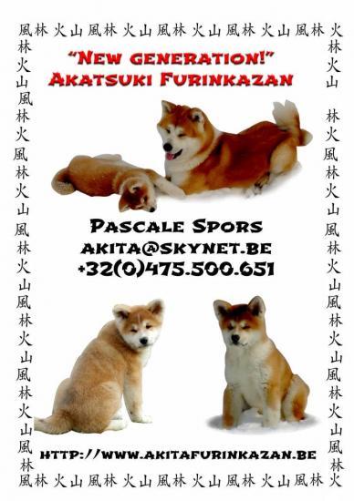 akatsuki-3.jpg