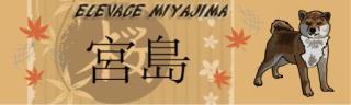 Shiba No Miyajima Belgique