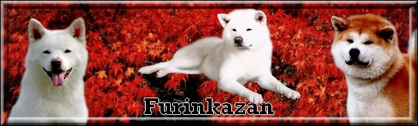 FURINKAZAN (Album Photos)
