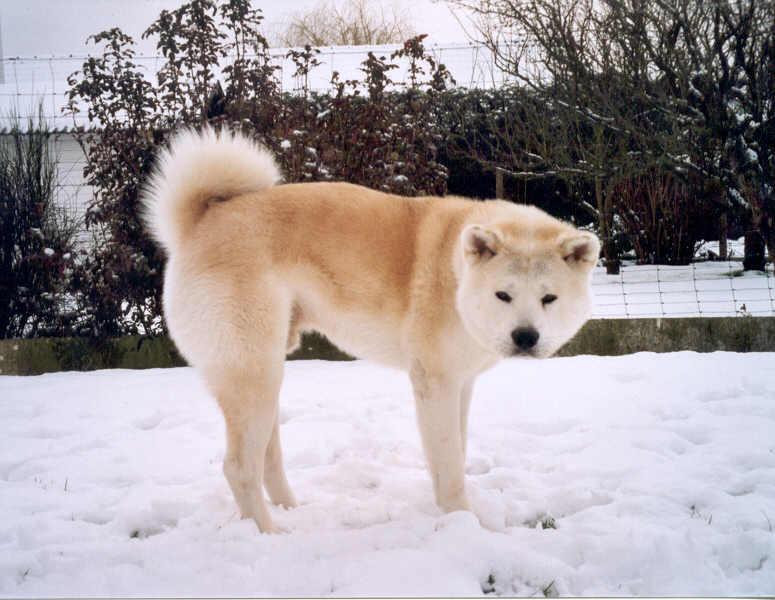zushiou-sneeuw-1.jpg